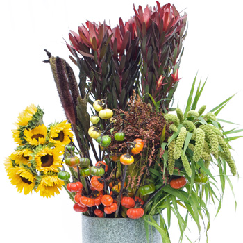 Autumn Sunflower Flower Mixed Pack