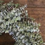 Baby Eucalyptus Wreath Delivery