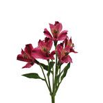 Balance Purpleberry alstroemeria Wholesale Flower Stem