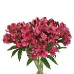Balance Purpleberry alstroemeria Wholesale Flower In a vase