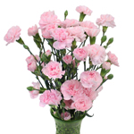 Ballet Pink Mini Carnation Flowers In a vase