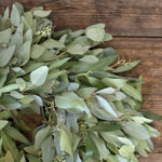 Bay Leaf and Seeded Eucalyptus Wholesale Greenery Up Close