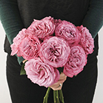 Berry Lace Garden Rose Bunch