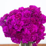 Berry Rush Carnation Flowers In a vase