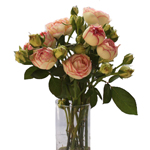 Biedermeier White and Pink Garden Wholesale Roses In a vase