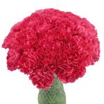 Bizet Hot Pink Carnation Flowers In a vase