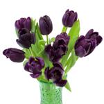 Black Jack Tulip Wholesale Flower in a Vase