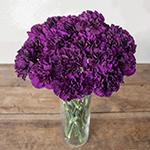 Blackish Purple Carnation Flowers In a vase