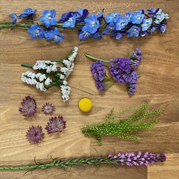 Blue Lake Wildflowers DIY Combo Pack