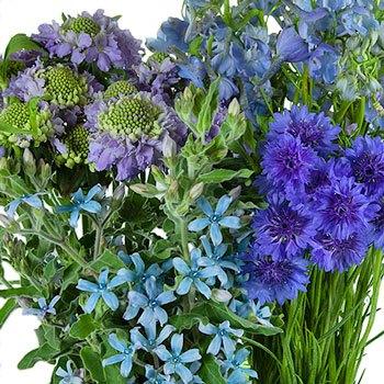 Blue Wilflower DIY Flower Kit Up Close