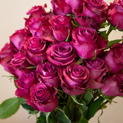 Blueberry fresh cut Wholesale Roses In a vase