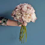 Blush Brownie Wholesale Peony Bunch in a hand