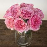 Blush Pink Garden Wholesale Roses In a vase