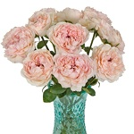 Blushing Button Garden Wholesale Roses In a vase