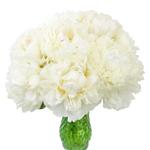 Bowl of Cream Peony in a vase