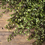 Boxwood bulk wedding greenery
