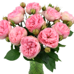 Bridal Pink Peony Wholesale Roses In a vase