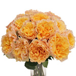 peach campanella garden roses sold online for home delivery