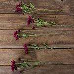 Burgundy pom bulk flowers