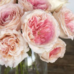 Cabbage Shell Pink Rose Bunch