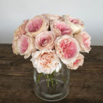 Cabbage Shell Pink Wholesale Roses In a vase