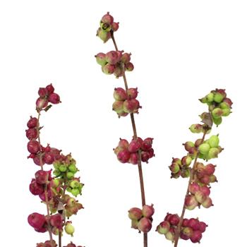 Purple Callicarpa Wedding Flower
