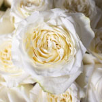 White rose DIY wedding flowers
