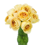 Caramel Antique Garden Wholesale Roses In a vase