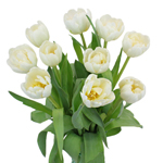 Casablanca Cream Double Tulip Wholesale Flower In a vase