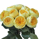 Catalina Beach Garden Wholesale Roses In a vase