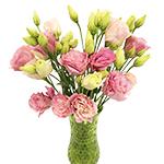 Lisianthus_Cut_Flower_Light_Pink