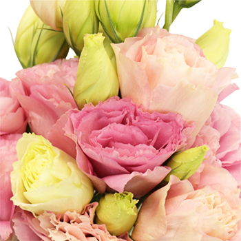 Pink Lisianthus Flower for June to September Delivery