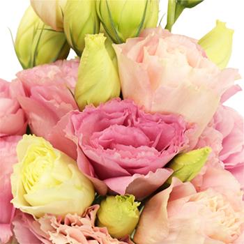 Catalina Rose Pink Lisianthus Wholesale Flower Upclose
