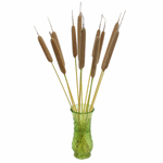 Horsetail - Buy Bulk FREE SHIPPING!