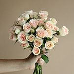 Chablis Light Pink Wholesale Rose Bunch in a hand