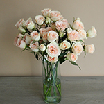 Chablis Light Pink Wholesale Roses In a vase