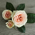 Chablis Light Pink Spray Rose Bunch