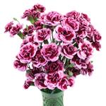 Chameleon Pink Carnation Flowers In a vase