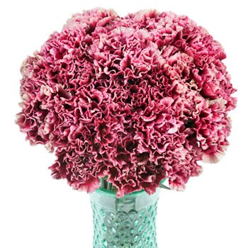 Chelo Blush and Magenta Carnation Flowers In a vase