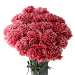 Cherrio Bicolor Hot Pink and Pink Carnation Flowers In a vase