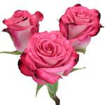 Cherry Follies Hot Pink Spray Rose Stem