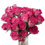 Cherry Follies Hot Pink Spray Wholesale Roses In a vase
