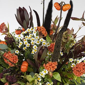 Pumpkin Fall Flower Pack