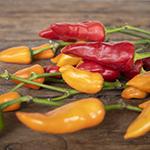 Fresh cut chili pepper wholesale fall greens for sale near me