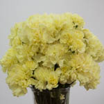 Citrus Love Carnation Flowers In a vase