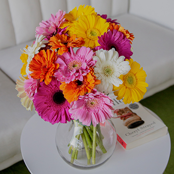 Farm Fresh Cut Gerbera Daisies For Your House