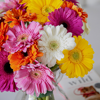 Assorted Gerbera Daisies Valentines Day Flowers
