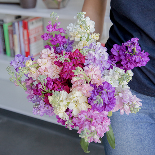 Mother's day color stock wholesale flowers