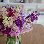 Farm_Mix_Stock_Flowers