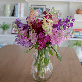 Farm Fresh Flowers For Your House Stock